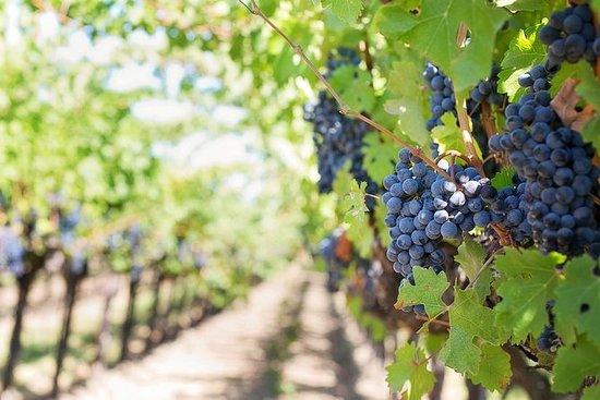 ROMAGNA葡萄酒品鑑之旅