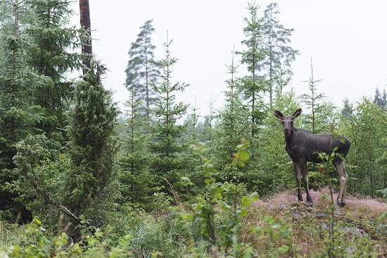 ストックホルムの野生動物サファリ