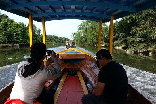 Safari de la rivière Mangrove