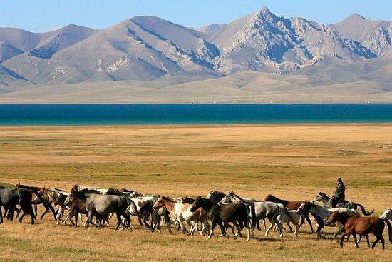 Oppvåk din indre nomad ved kysten av...