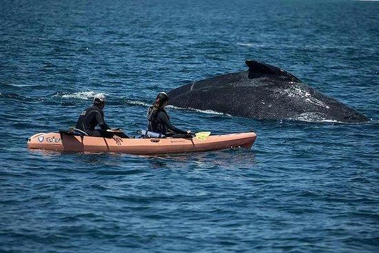 Alquiler de Kayak Oceano Doble - 4...