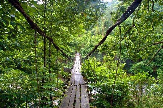 巴统Kobuleti的Mtirala国家公园徒步旅行