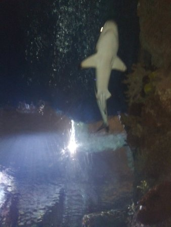 Shark Reef at Mandalay Bay Hotel and Casino صورة فوتوغرافية