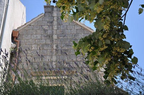 Kuna Peljeska, Kroatia: Kuna