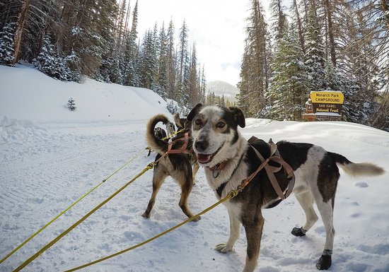Travel through the park in the snow, these handsome dogs are such hard workers.