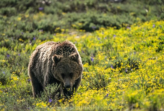 Wild Wyoming Tours