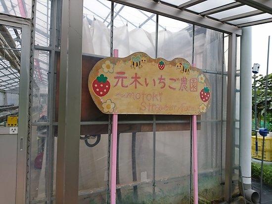 Motoki Farm