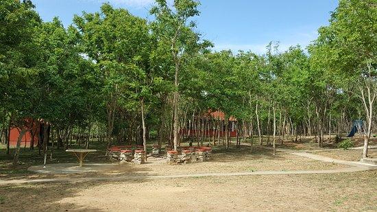 Campfire Area-Ambuja Farms ,Bandipur
