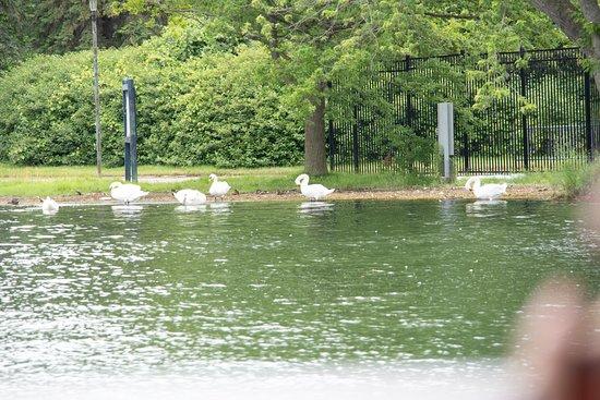 1-Hour Toronto Harbour Tour with Live Narration: Swans on Toronto Harbor island