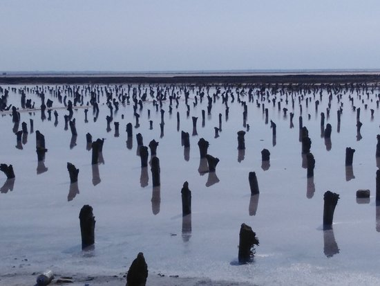 Nizhniy Baskunchak, Ρωσία: Столбы в солёных озерах