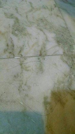 Monroe, NJ: More hairs on floor