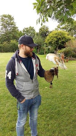 Bailey the Barn Owl