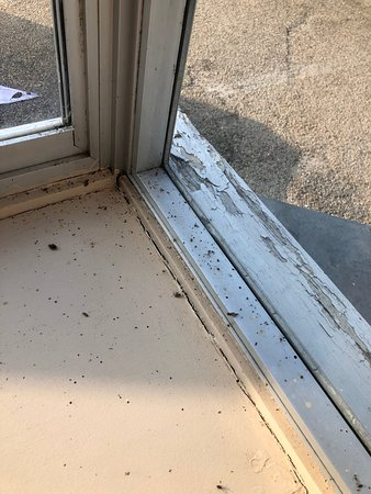 Royal Bath Hotel & Spa Bournemouth: The window next to where we were seated in the restaurant; dead flys, cobwebs; years of dirt!