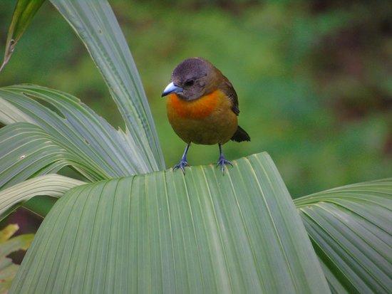 Rio Agujitas Eco Farm – fotografia