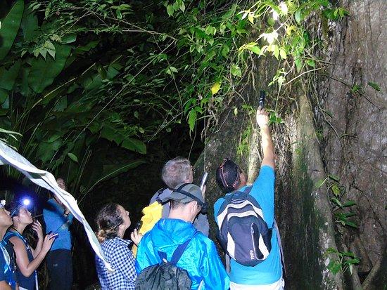 Rio Agujitas Eco Farm: Night Tour  en los Senderos de la finca d ela familia