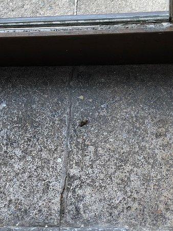 Dead flies where we ate