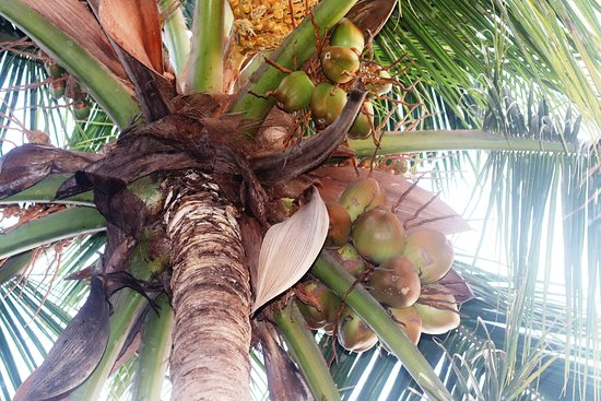 Sahakari Spice Farm (Ponda) - 2020 All You Need to Know ...