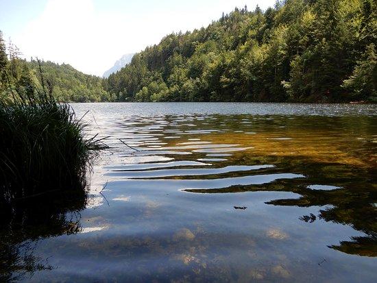 Der Längsee