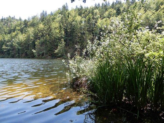 Kufstein, النمسا: Der Längsee