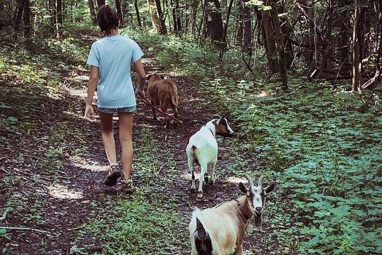 Hoof It - Goat Treks