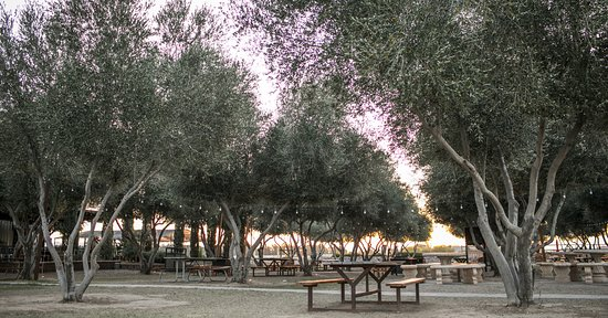 Queen Creek Olive Mill - UPDATED 2019 - All You Need to Know