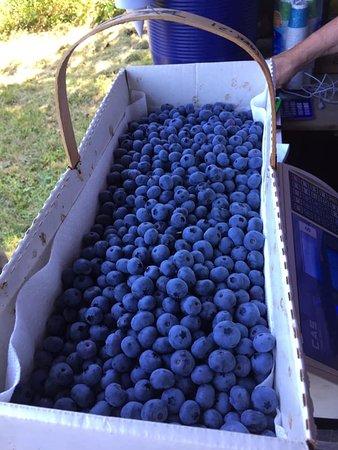 Tikkanen's Berry Farm