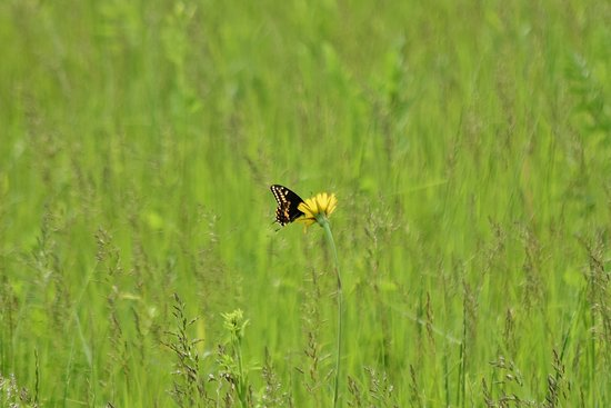 Midewin National Tallgrass Prairie (Wilmington) - 2020 All You Need to Know BEFORE You Go (with Photos) - Tripadvisor