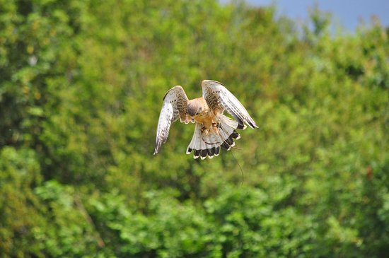 The British Bird Of Prey Centre Picture Of The British Bird Of Prey Centre Carmarthen Tripadvisor