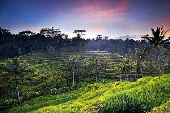 Celuk, Indonésia: Рисовые террасы Бали