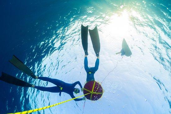 Ocean Freediving Cebu Philippines