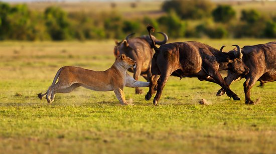 Safari And Trekking Africa