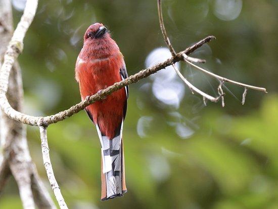 Vietnam Wildlife Tours & Research - Specialists Birding in Asia