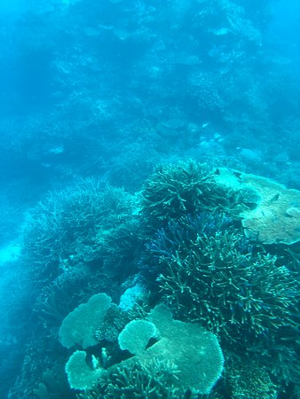 Valokuva: Quicksilver Outer Great Barrier Reef Snorkel Cruise from Port Douglas