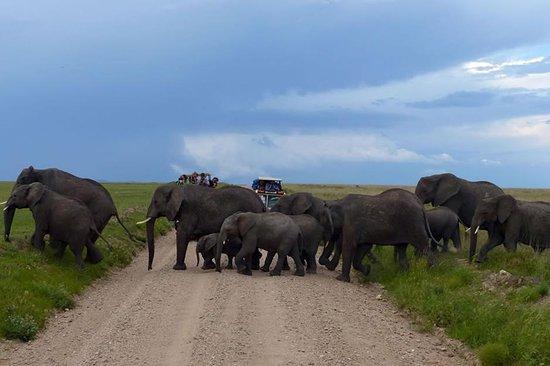 Bintu Africa Adventures