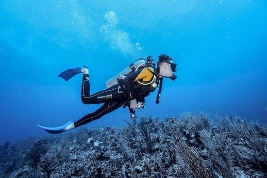 Bahia Divers: 2