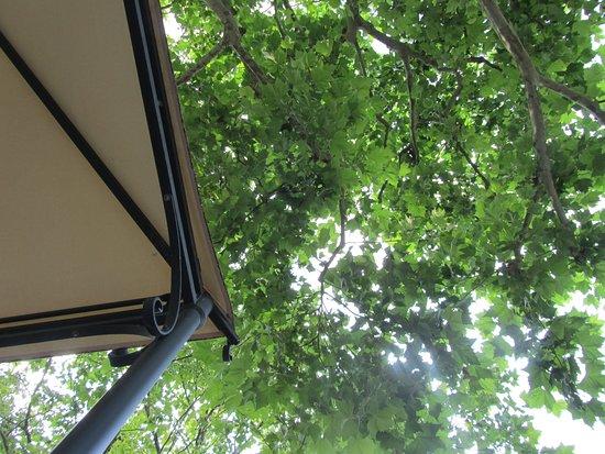Lauschiger Garten unter der riesigen Platane