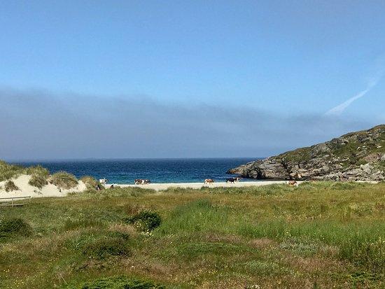 I dag var det kuene som hadde tatt over turstien ned til stranden. De kunne ikke bry seg mindre over oss, bare luntet rundt etter godt gress å spise. Vigdelstranden er en koselig strand med sanddyner som skjermer for vinden. Langgrunt så passer godt for de små. Mange finer tur stier rundt omkring