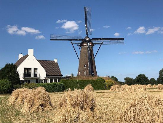Windkorenmolen De Roosdonck