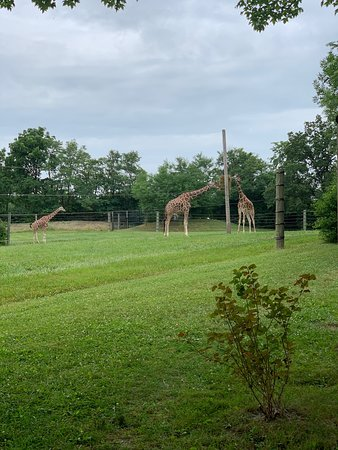 Fort Wayne Children's Zoo - Book in Destination 2019 - All You Need
