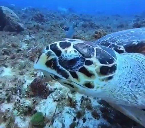 Living Underwater (Cozumel)