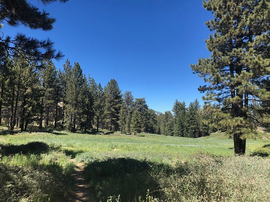 Mt. Pinos: Area near parking lot at top of road