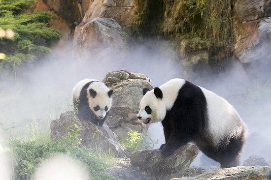 ZooParc de Beauval门票