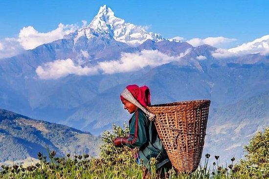 Privat helgedagsvandring i Annapurna...
