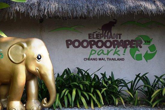 半天大象Poo Poo纸公园