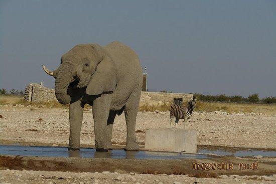 Safari emozionante di 4 giorni a