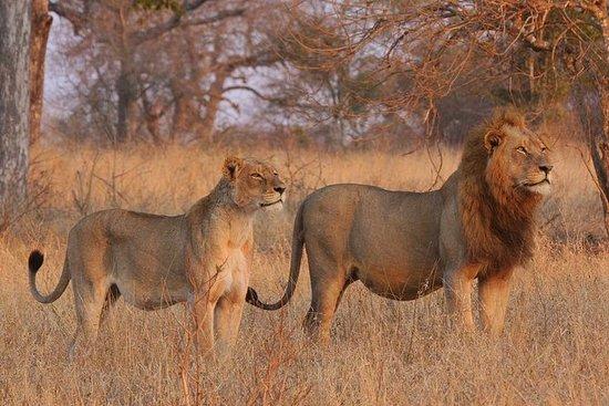 2 días de presupuesto Kruger Park...