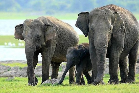 Privat tur fra Colombo - (Sigiriya...