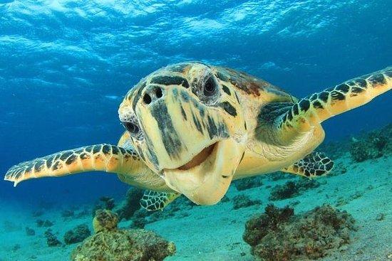 Regarder les tortues