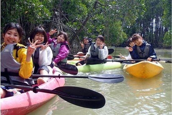 Mangrove leting kajakkpadling touring