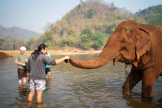 Elephant Freedom Chiang Mai